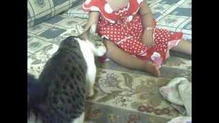 قط كبير شرس  يهاجم طفله صغيره \ للكبار فقط
