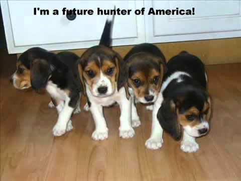 hog hunting song number 6 - David Cooler (dog huntin man)