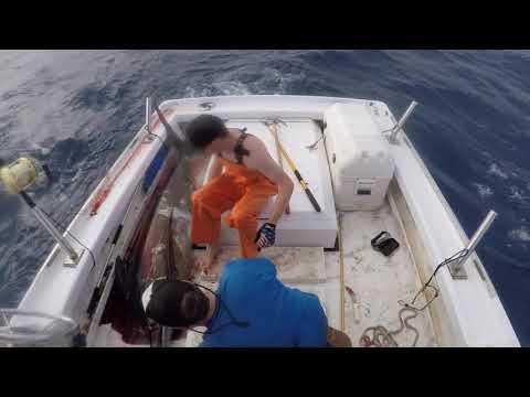 Molokai Dreamin - Ahi and Marlin