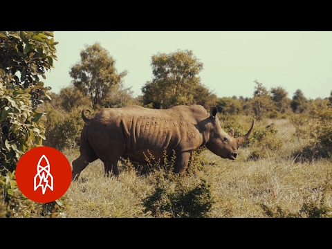 Protecting Africa's Last Rhinos from Poaching