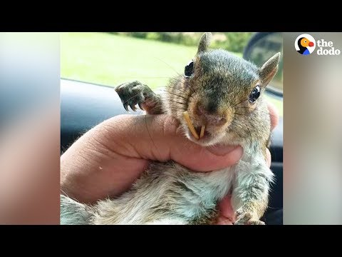 Rescue Squirrel Changes Man's Life | The Dodo