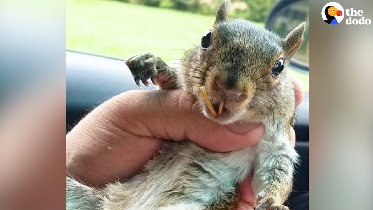 rescue squirrel changes man s life the dodo youtube