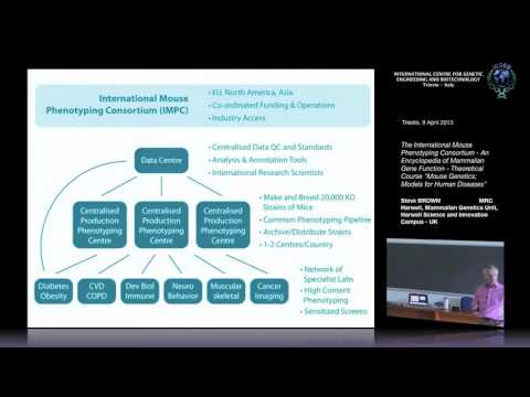 S. Brown -The International Mouse Phenotyping Consortium - A