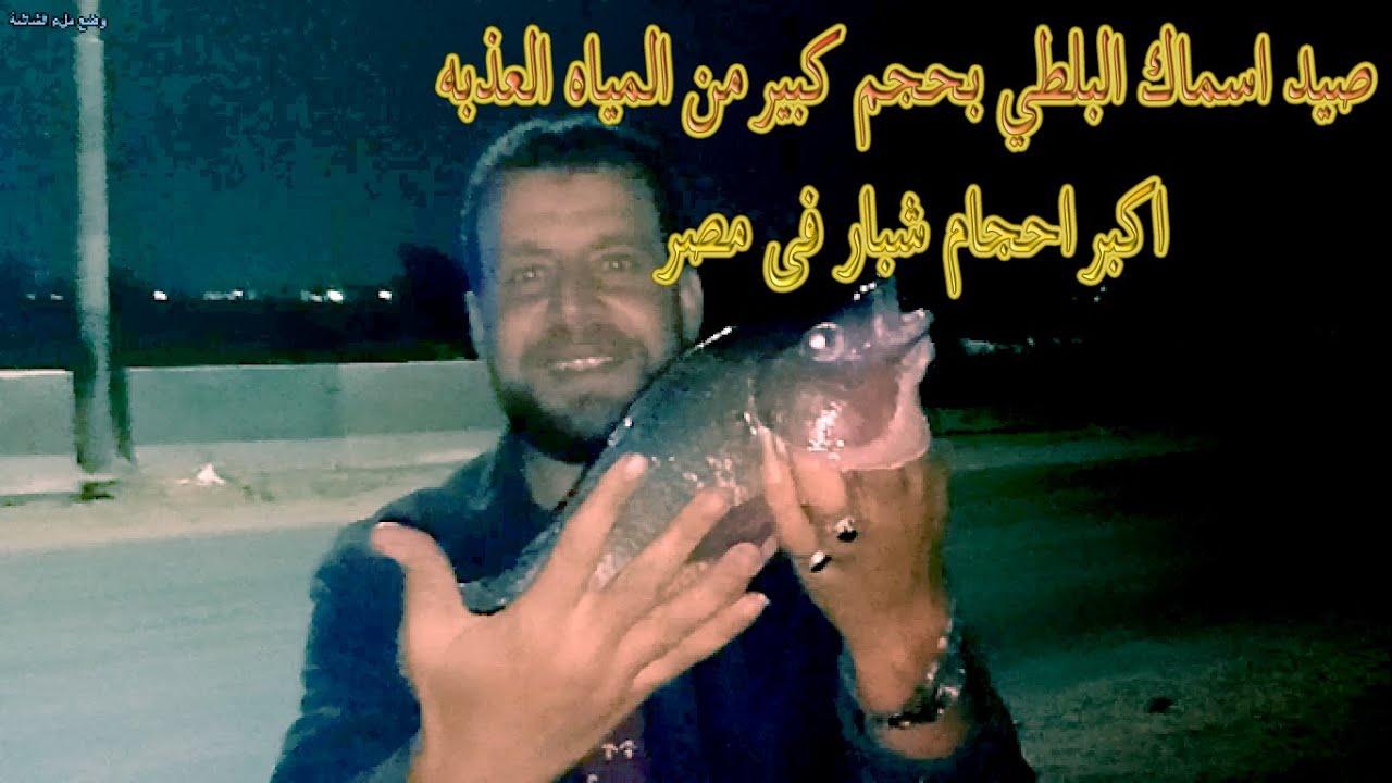 اكبر احجام شبار فى مصر - صيد اسماك البلطي بحجم كبير من المياه العذبه