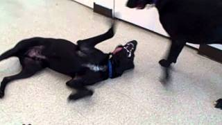 Casey & Monty's Play Date! * Both Adopted