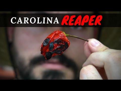 Carolina Reaper BBQ Ribs | La Capital