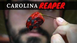 El chile más picante del Mundo | La Capital