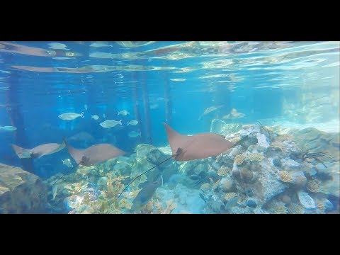 A Day at Discovery Cove in Orlando, FL