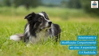 Adestramento e Modificação Comportamental em cães: A expectativa X A realidade. thumbnail
