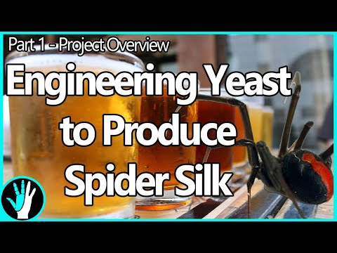 Spider Beer - Making Yeast Produce Spider Silk - Project Overview