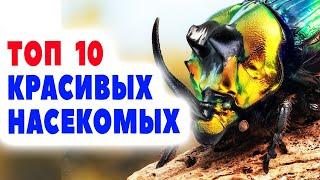 ТОП 10 самые КРАСИВЫЕ насекомые в МИРЕ