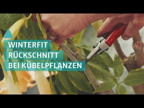 Die ideale Vorbereitung für Kübelpflanzen | BAUEN & WOHNEN