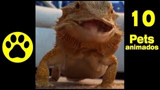 Funny Animals - Animais Divertidos -10