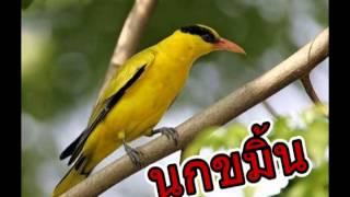 นกขมิ้น By อ.เสาร์
