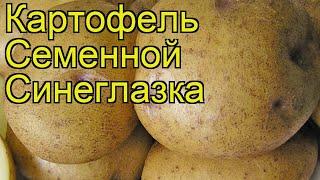 Картофель семенной Синеглазка. Краткий обзор, описание характеристик, где купить картофель