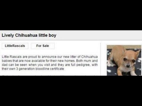 Little Rascals Dog Breeders The Facts