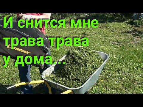 Мульчирование скошенной травой. Польза или вред?
