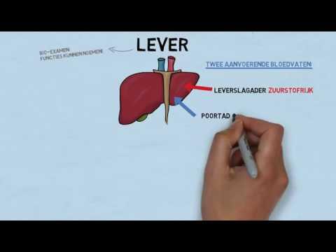 Download Uitleg examenstof biologie door SSL: de lever