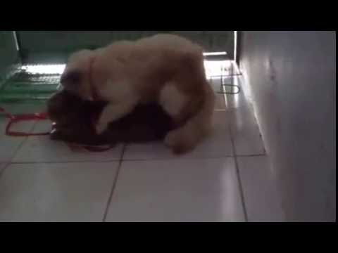 NEW 2016 Funny Cats mating 1