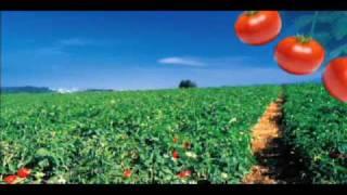 楽しいトマトの歌に注目!
