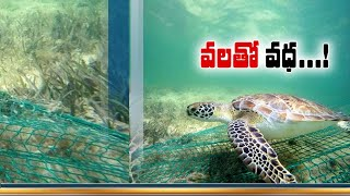 Kerala's NGO Takes Initiative to Conservation of Sea Turtle