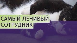 Кот из МИД Великобритании растолстел и обленился
