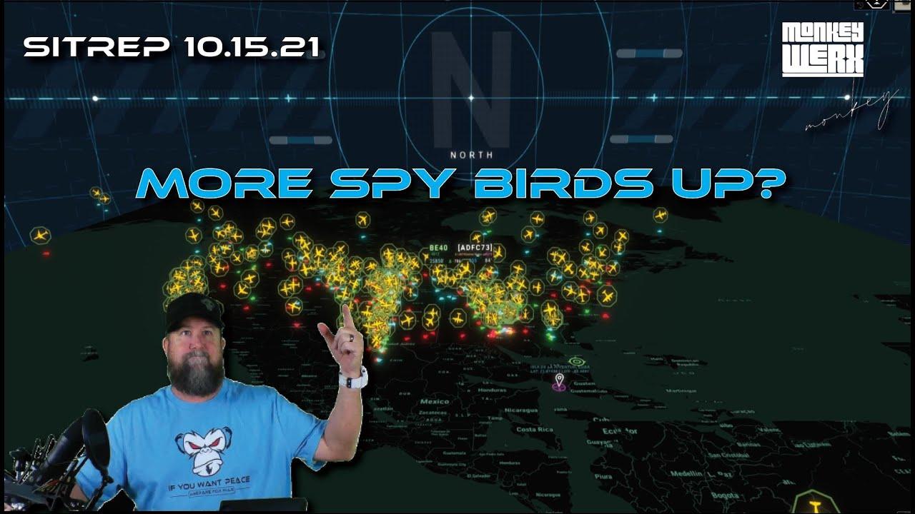 More Spy Birds Up?