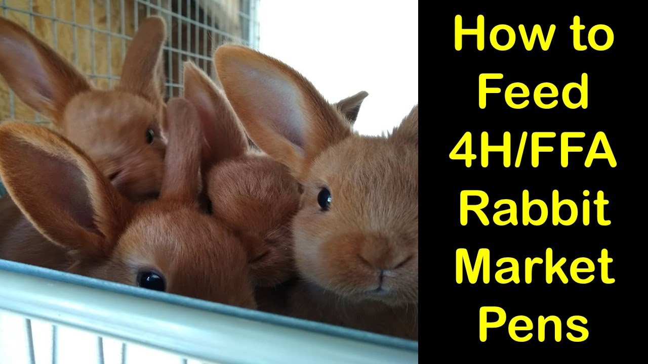 How to Feed 20H/FFA Rabbit Market Pens