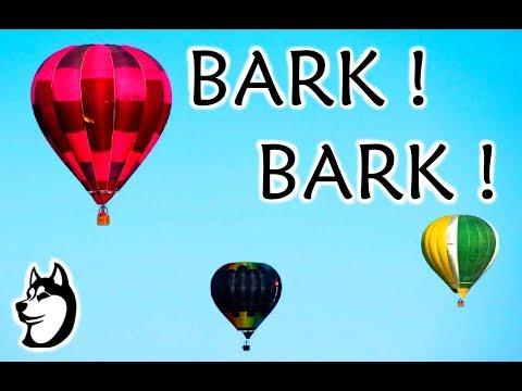 My husky Dont like Air Balloons!