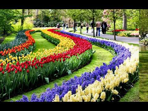 Keukenhof Virtually Open - Gardener Daan shows you Beach Garden, Mill forest and the fountain Hqdefault