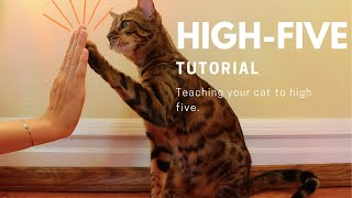 how to teach your cat to highfive