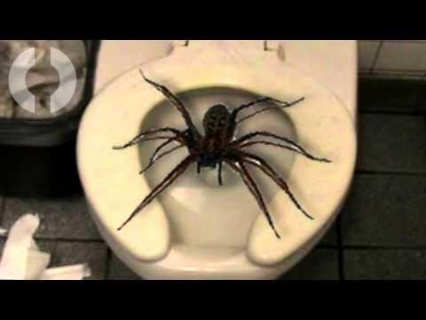 5 Animali Terrificanti Che Puoi Ritrovarti In Bagno!