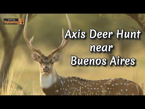 Big Free-Range drop main beam Whitetail in Texas from YouTube · Duration:  1 minutes 19 seconds