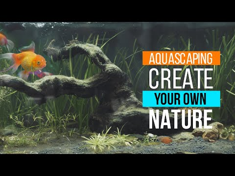 Create your Own Nature - Aquascaping  | Tank Build