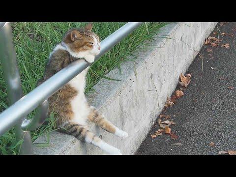 夕暮れの お座り猫ちゃん /Cat sitting relaxed   Cat+1 Channel