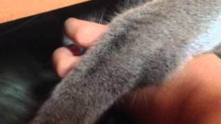 Шартрез под шкафом