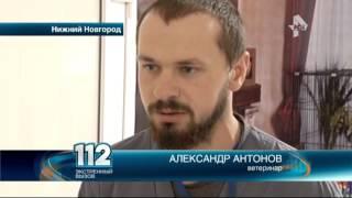 В Нижнем Новгороде разгорелся скандал из-за собаки