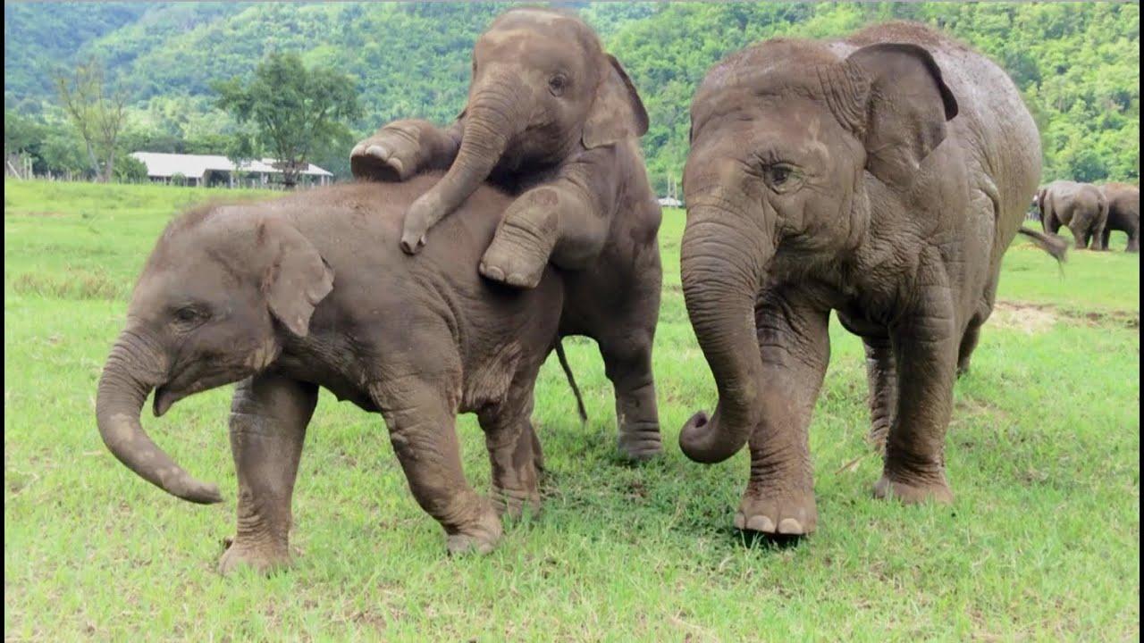 Cute baby elephant running - YouTube