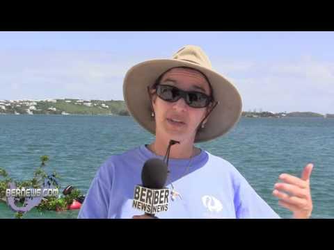 Bermuda Longtail Released At BAMZ, Sept 21 2012