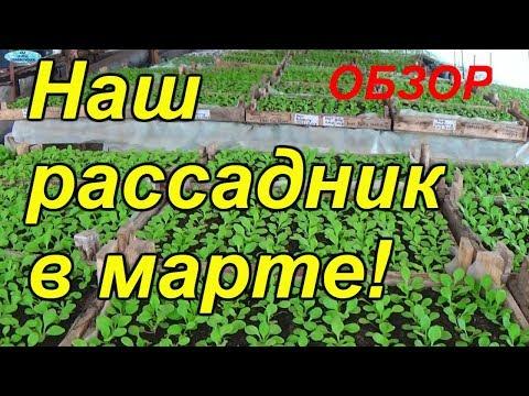 Обзор нашего рассадника на 19 марта 2018 года! Огурцы, помидоры, петуния - в одном видео!
