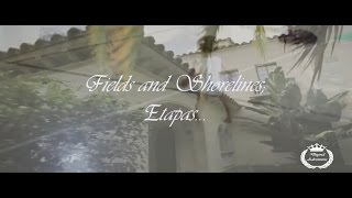 etapas   1 deyvid adventures m83 fields shorelines and hunters etapas de la vida