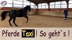 So bringt ihr euer Pferd dazu, euch an der Aufstiegshilfe abzuholen! #Pferdetaxi !