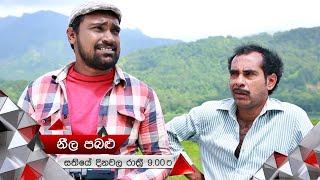 කුරුළුට තව කරදරයක්?   Neela Pabalu   Sirasa TV Thumbnail