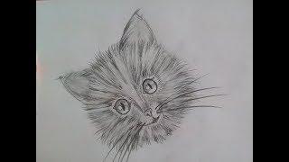 Как нарисовать котёнка карандашом.  Портрет кошки. Уроки рисования для начинающих