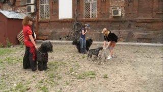 """""""Новости ОТН"""" (10.06.15г., Бийск)"""