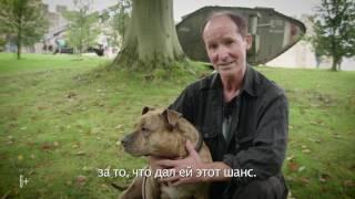 """Трансформеры: Последний рыцарь - Фичер """"Собака Фрея"""""""
