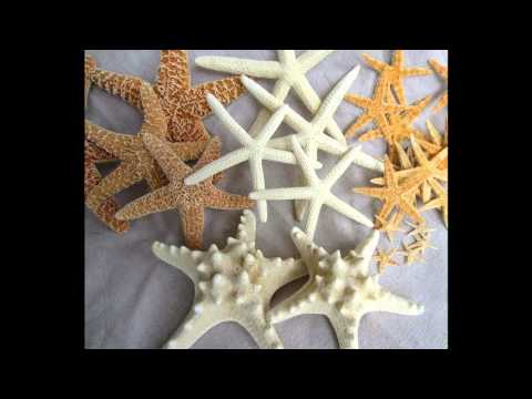Easy Starfish Decorations For Home