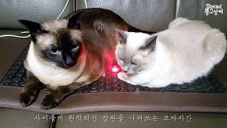 [집사하드털기]원적외선위에 구워지는 고양떡