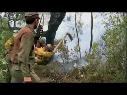 Documental Plan Infoca 'La guerra del fuego'    CANAL MULTIMEDIA    Consejería de Medio Ambiente