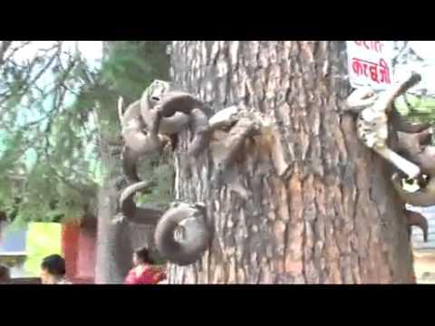 VEER GHATOTHKACH TEMPLE MANALI - HIMACHAL PRADESH (INDIA)